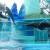 Biểu diễn cá heo Hạ Long