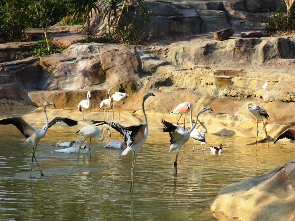Động vật tại vườn thú Safari
