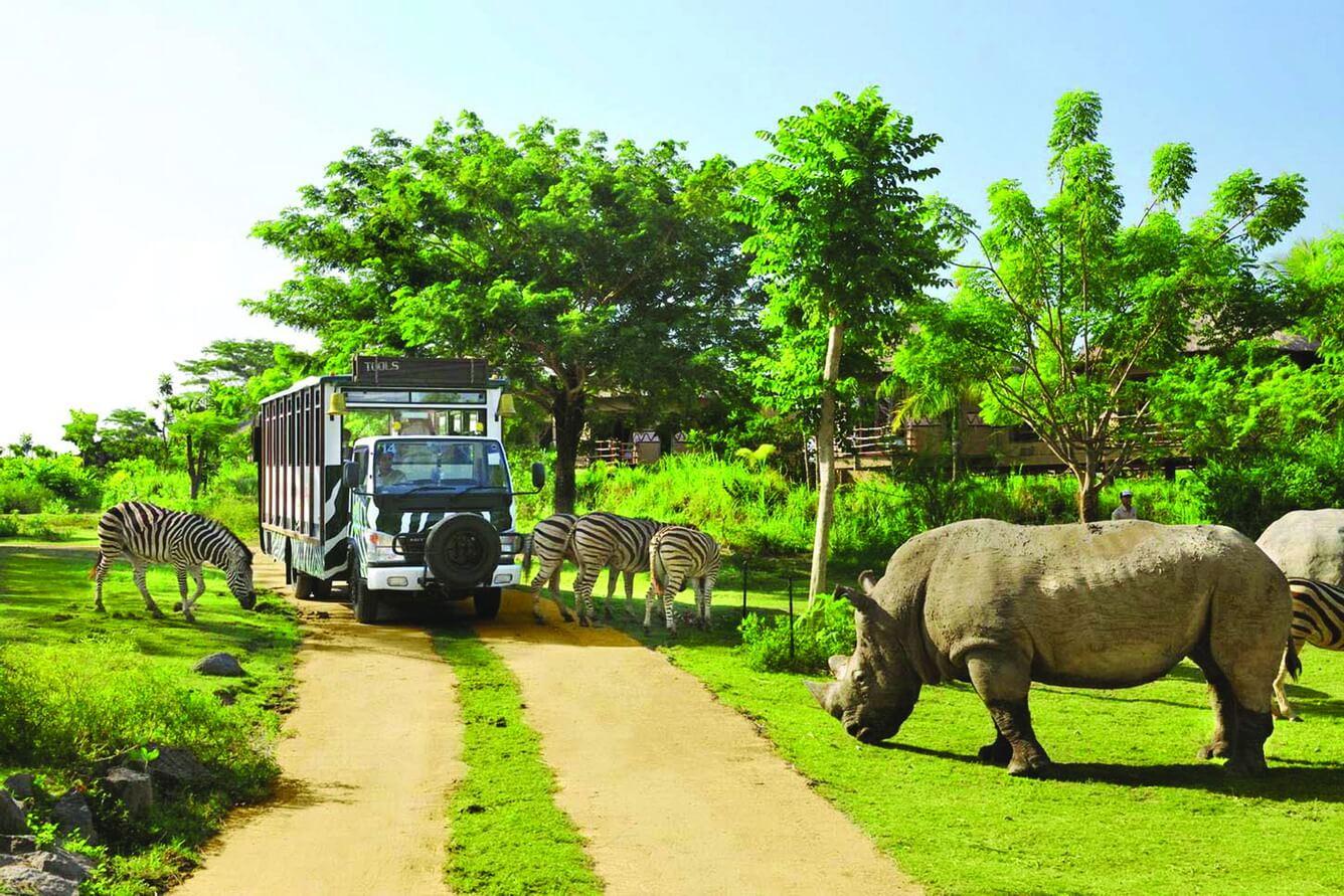 Tham quan vườn thú bằng xe bus